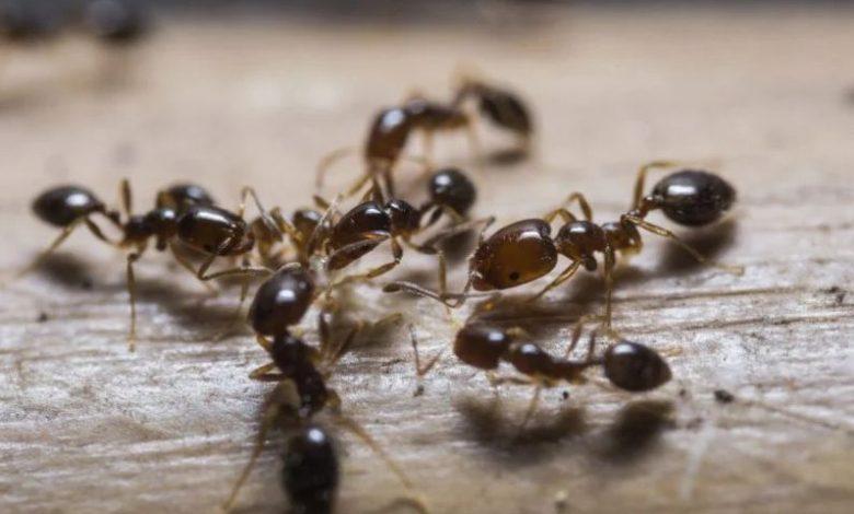 ما تفسير رؤية النمل في المنام على الفراش لابن سيرين سواح هوست