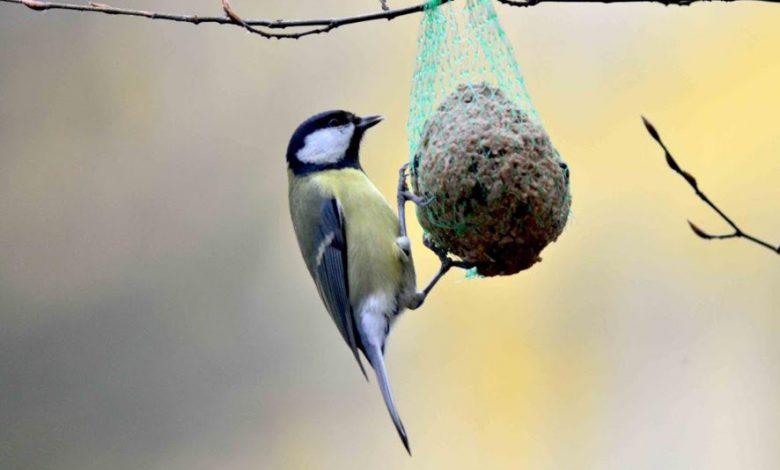 تفسير حلم رؤية إطعام الطيور في المنام لابن سيرين سواح هوست