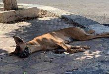 """صورة مكافأة 30 ألف جنيه لمن يدلي بمعلومات عن قاتل """"كلب"""" طبيب أسنان"""
