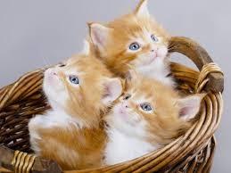 رؤية القطط في المنام والخوف منها سواح هوست